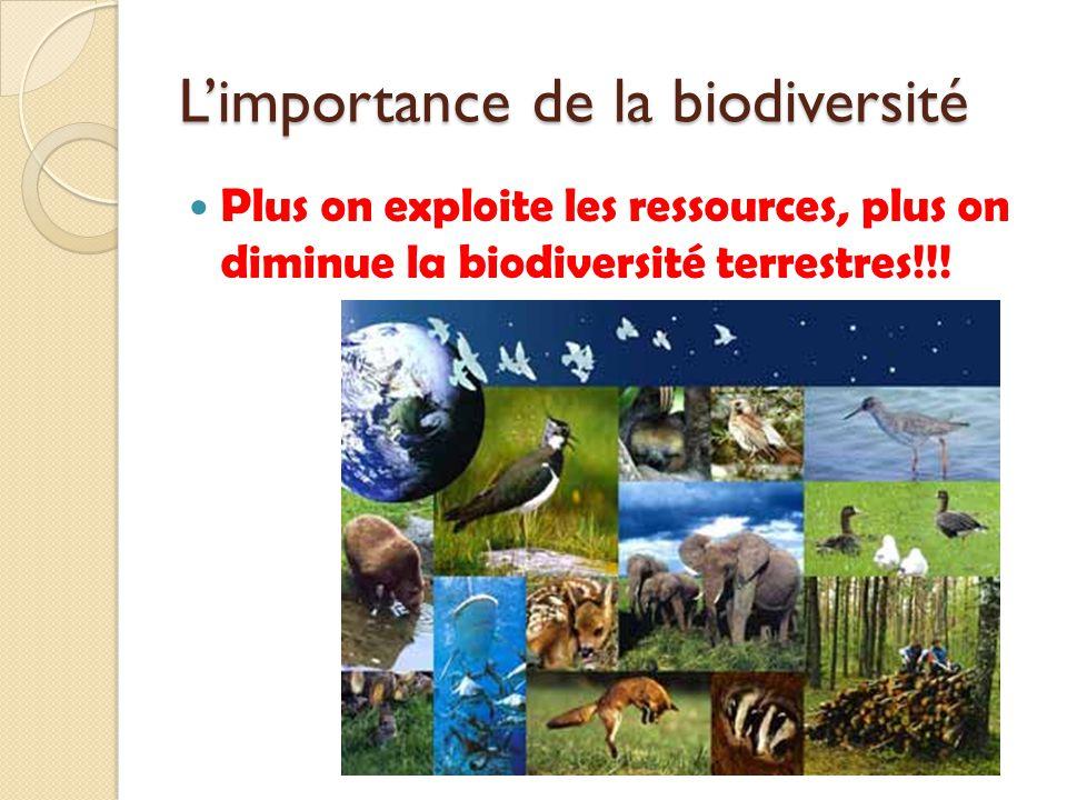Limportance de la biodiversité Plus on exploite les ressources, plus on diminue la biodiversité terrestres!!!
