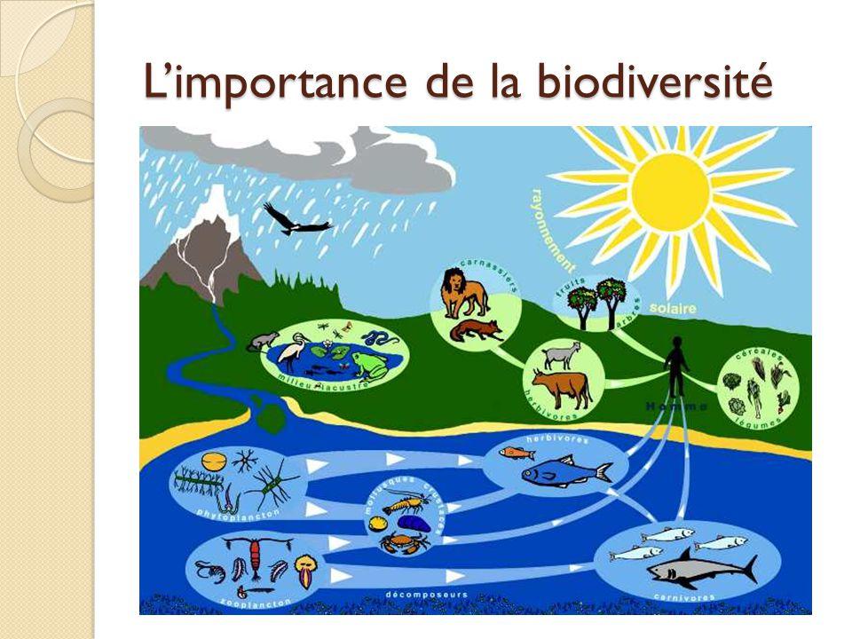 Limportance de la biodiversité