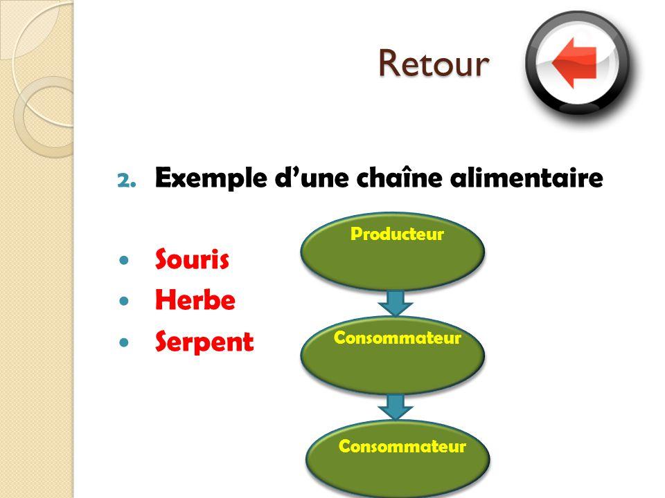 Retour 2. Exemple dune chaîne alimentaire Souris Herbe Serpent ProducteurConsommateur