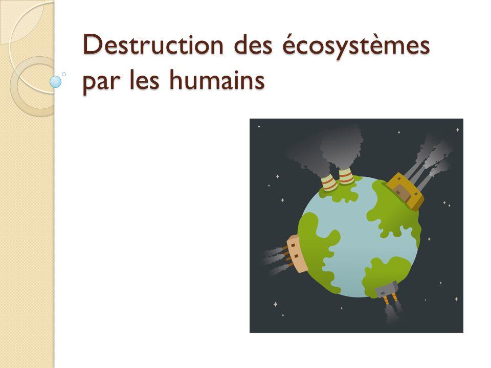 Destruction des écosystèmes par les humains