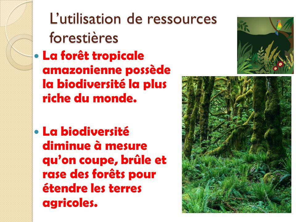 Lutilisation de ressources forestières La forêt tropicale amazonienne possède la biodiversité la plus riche du monde. La biodiversité diminue à mesure