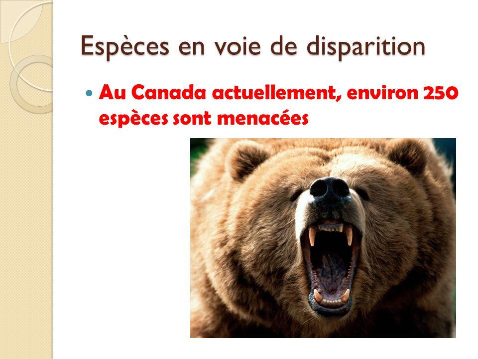 Espèces en voie de disparition Au Canada actuellement, environ 250 espèces sont menacées
