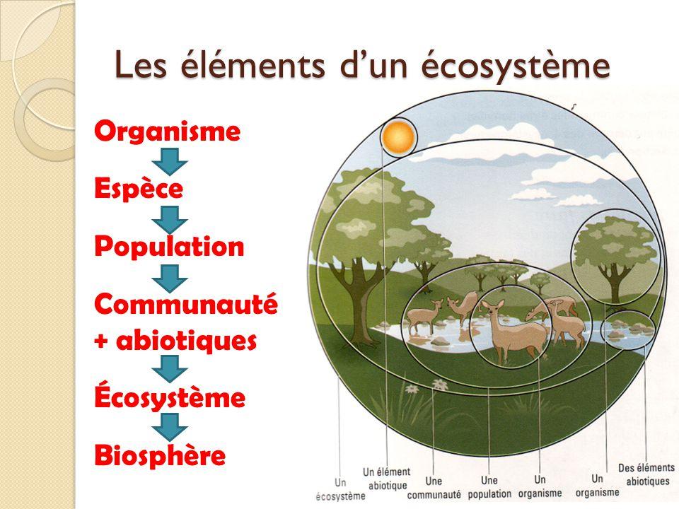Les éléments dun écosystème Organisme Espèce Population Communauté + abiotiques Écosystème Biosphère