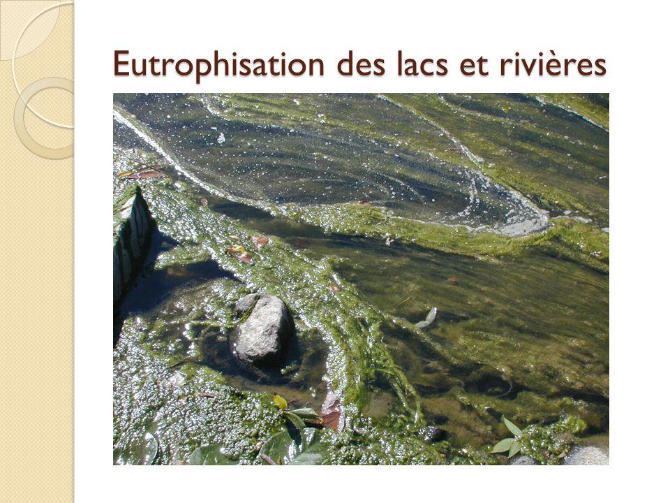 Eutrophisation des lacs et rivières