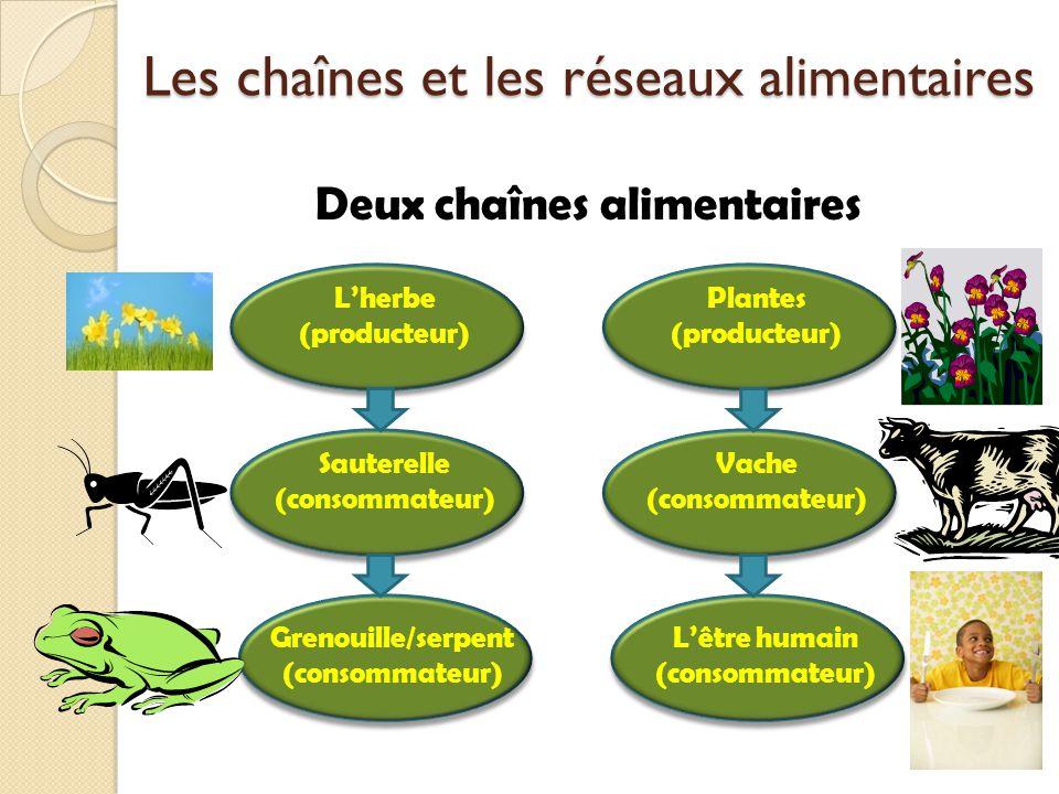 Deux chaînes alimentaires Les chaînes et les réseaux alimentaires Lherbe (producteur) Sauterelle (consommateur) Grenouille/serpent (consommateur) Plan