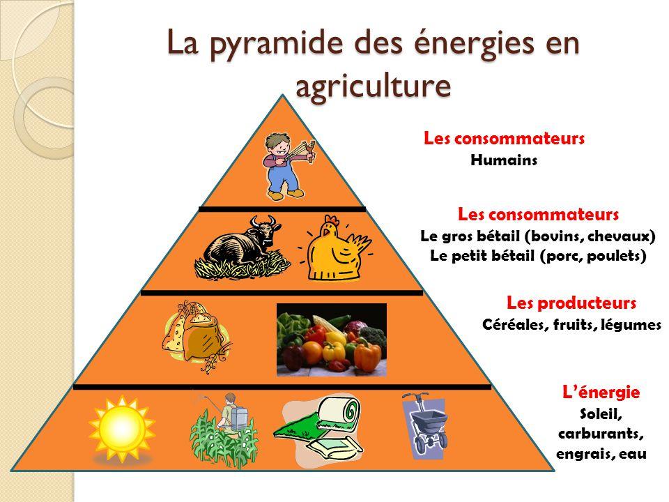 La pyramide des énergies en agriculture Les consommateurs Humains Les consommateurs Le gros bétail (bovins, chevaux) Le petit bétail (porc, poulets) L