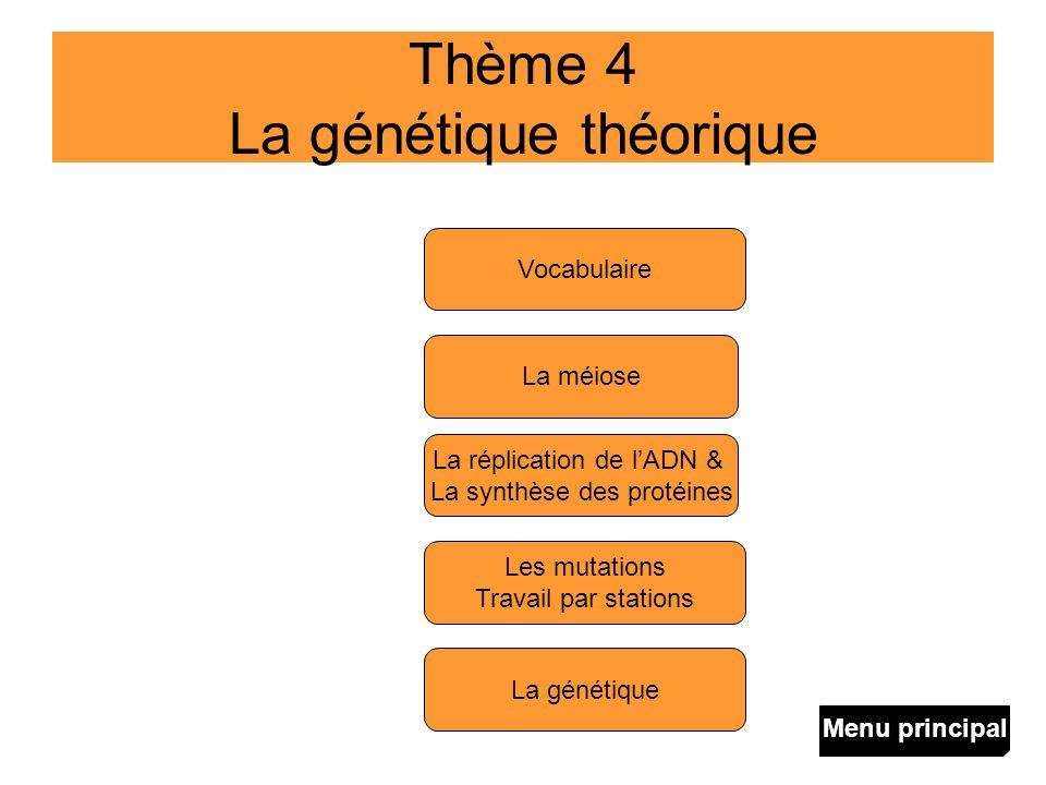 Thème 4 La génétique théorique La méiose La réplication de lADN & La synthèse des protéines La génétique Les mutations Travail par stations Vocabulair