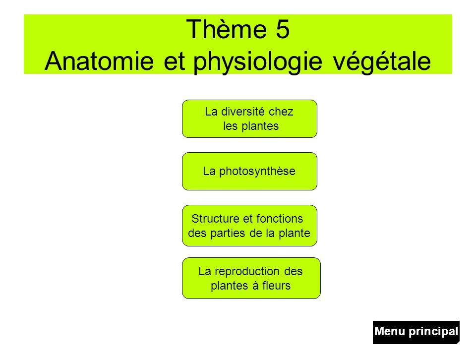 Thème 5 Anatomie et physiologie végétale La photosynthèse La reproduction des plantes à fleurs Structure et fonctions des parties de la plante La dive