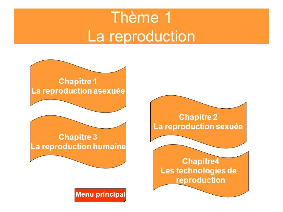 Thème 1 La reproduction Chapitre 1 La reproduction asexuée Chapitre 2 La reproduction sexuée Chapitre 3 La reproduction humaine Chapitre4 Les technolo