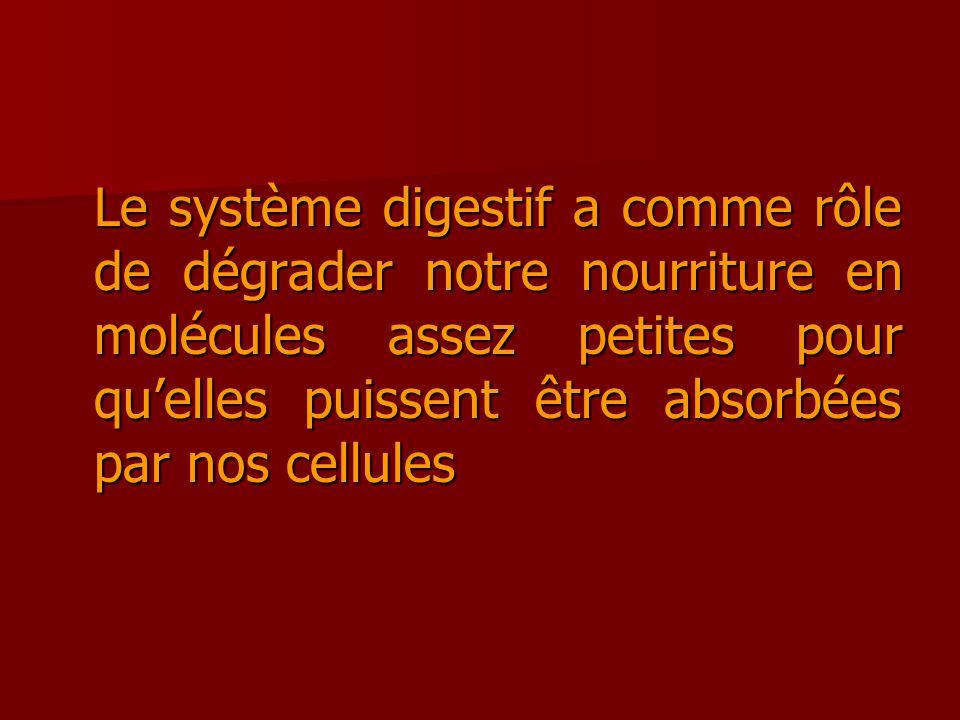 Le système digestif a comme rôle de dégrader notre nourriture en molécules assez petites pour quelles puissent être absorbées par nos cellules