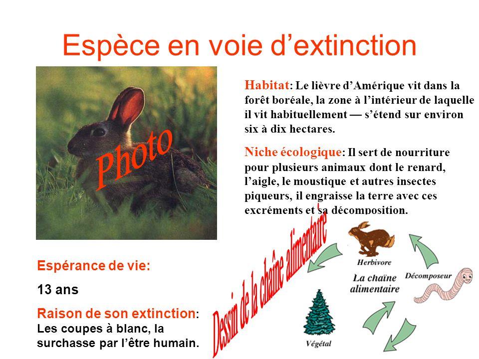 Espèce en voie dextinction Habitat : Le lièvre dAmérique vit dans la forêt boréale, la zone à lintérieur de laquelle il vit habituellement sétend sur environ six à dix hectares.