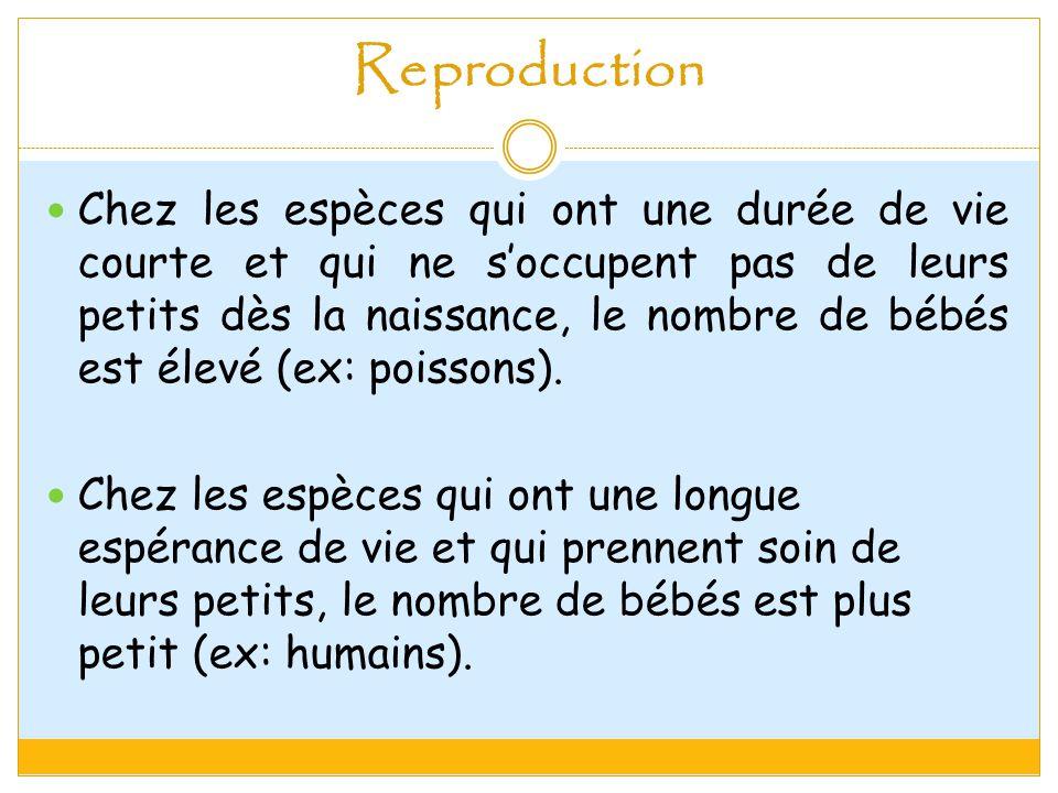 Reproduction Chez les espèces qui ont une durée de vie courte et qui ne soccupent pas de leurs petits dès la naissance, le nombre de bébés est élevé (ex: poissons).