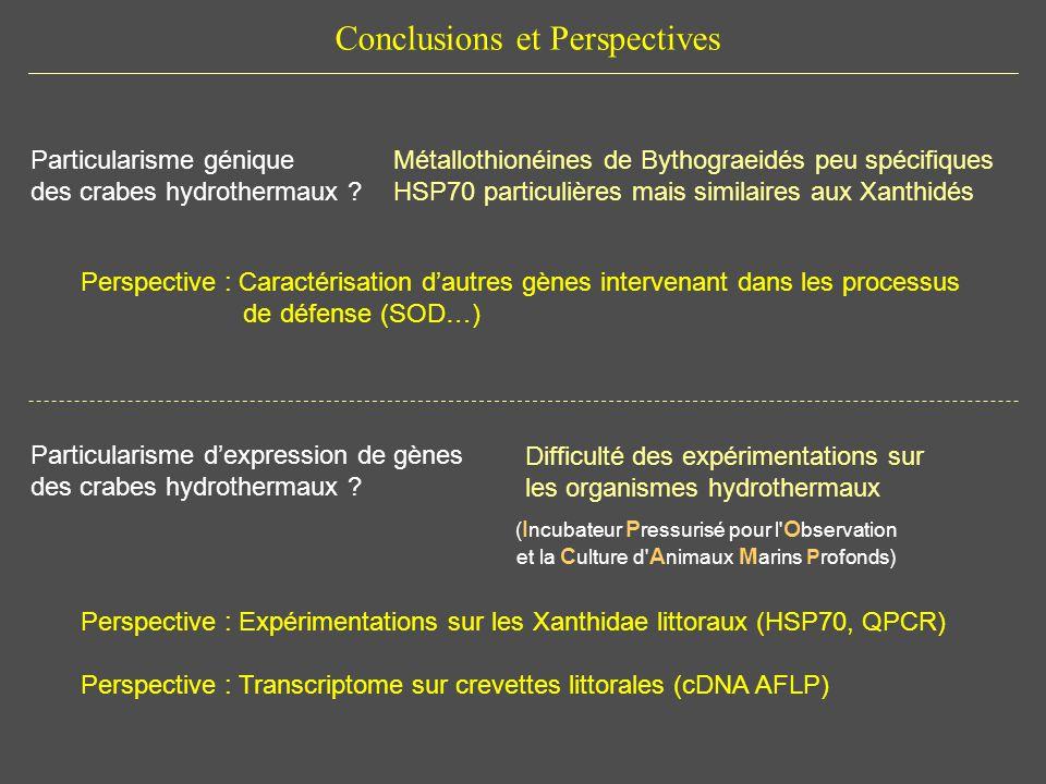 Conclusions et Perspectives Particularisme dexpression de gènes des crabes hydrothermaux ? Difficulté des expérimentations sur les organismes hydrothe