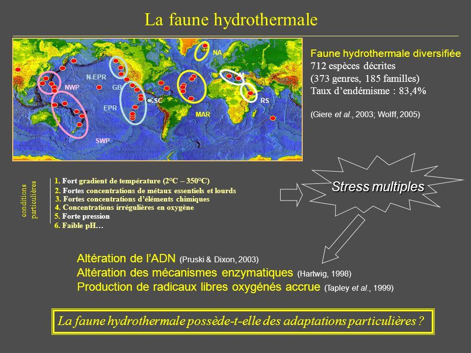 La faune hydrothermale Altération de lADN (Pruski & Dixon, 2003) Altération des mécanismes enzymatiques (Hartwig, 1998) Production de radicaux libres