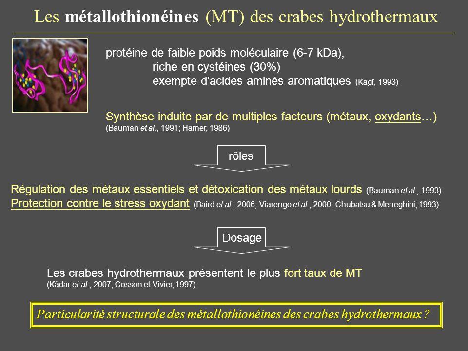 Les métallothionéines (MT) des crabes hydrothermaux protéine de faible poids moléculaire (6-7 kDa), riche en cystéines (30%) exempte dacides aminés ar