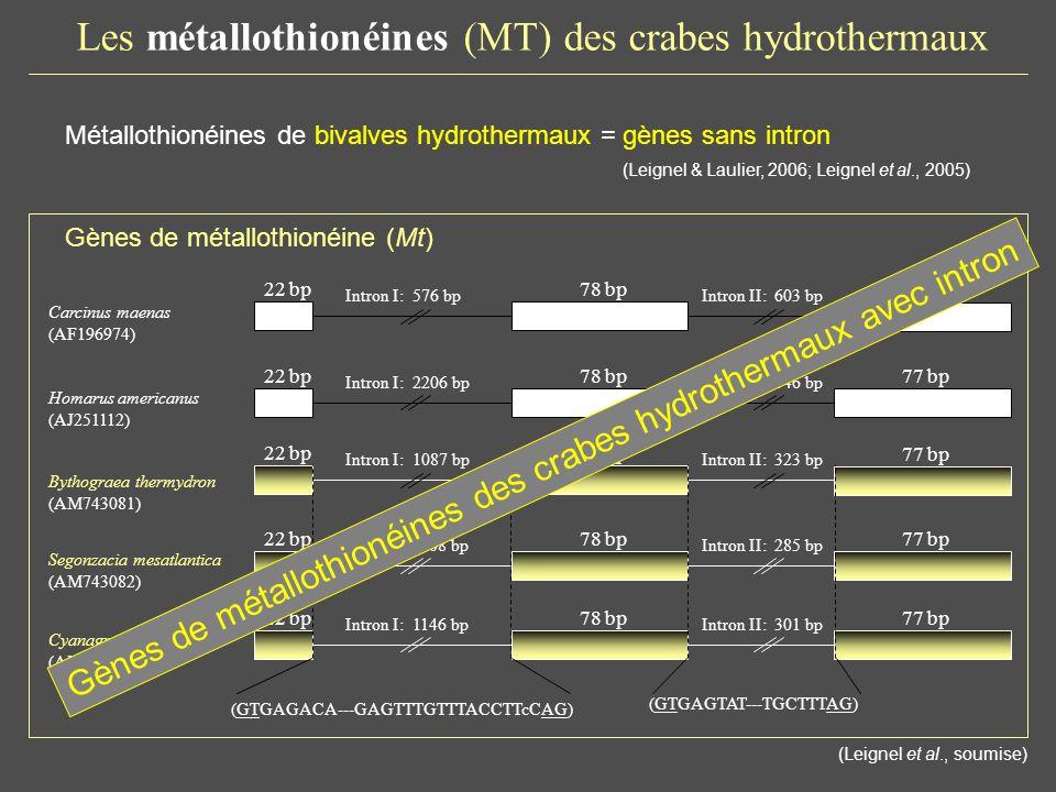 Les métallothionéines (MT) des crabes hydrothermaux domain Bythograea thermydron (1) Bythograea thermydron (2) Cancer pagurus Dromia personata Pachygrapsus marmoratus Cyanagraea praedator (1) Cyanagraea praedator (2) Segonzacia mesatlantica (1) Segonzacia mesatlantica (2) Carcinus maenas MT1b Carcinus maenas Carcinus maenas MTb Necora puber Eriocheir sinensis Portunus pelagicus Scylla serrata Scylla serrata MT2 Callinectes sapidus MTIIa (1 ) Callinectes sapidus MTIIa (2 ) Maïa squinado Callinectes sapidus MT1a Portunus pelagicus Scylla serrata MT2 Portunidae Varunidae Portunidae Majidae Portunidae Bythograeidae Grapsidae Cancridae Dromiidae Bythograeidae (Leignel et al., soumise) Métallothionéines des crabes hydrothermaux ~ similaires aux MT crabes