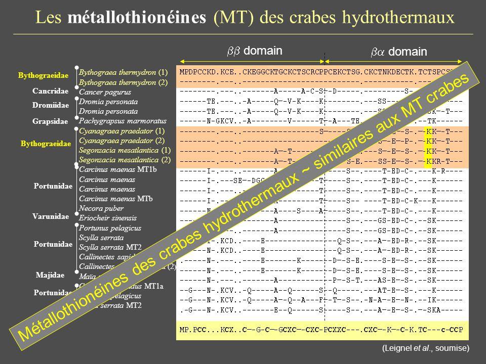 Les Heat Shock Protein 70 kDa (HSP70) des crabes hydrothermaux protéine de fort poids moléculaire (70 kDa), avec deux domaines (ATPase et région de liaison) Synthèse induite par de multiples facteurs (choc thermique, métaux, oxydants…) (Spees et al., 2002; Pedersen & Lundebye, 1996; Sanders & Martin, 1993) Conformations structurales des protéines néoformées ou dénaturées (Mayer & Bukau, 2005; Gullo & Teoh, 2004) rôle Particularité structurale des HSP70 des crabes hydrothermaux ?