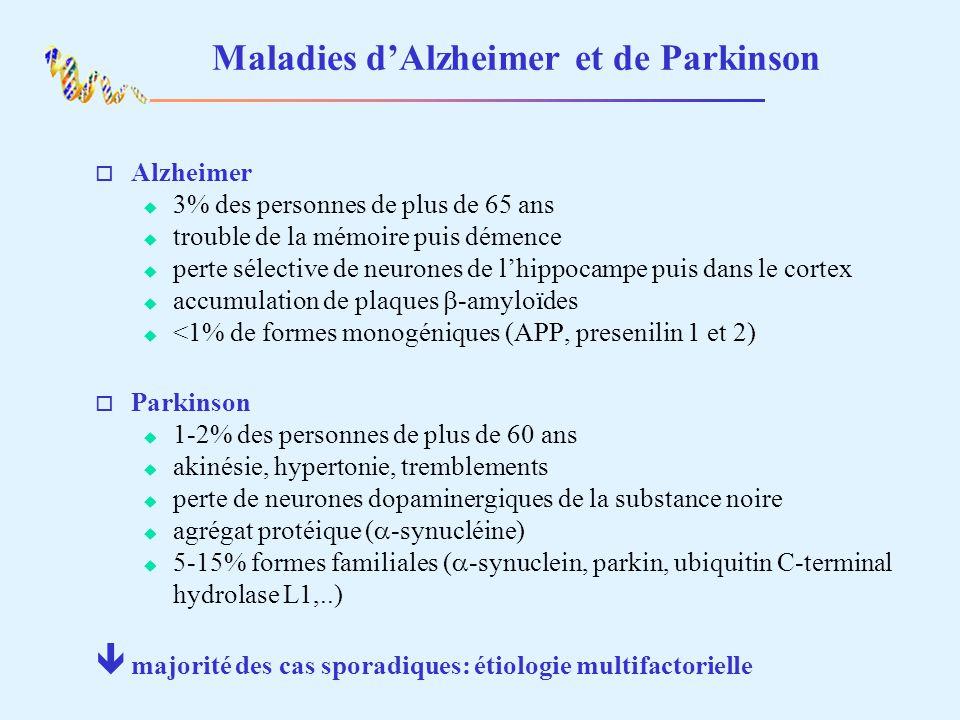 Maladies dAlzheimer et de Parkinson o Alzheimer 3% des personnes de plus de 65 ans trouble de la mémoire puis démence perte sélective de neurones de lhippocampe puis dans le cortex accumulation de plaques -amyloïdes <1% de formes monogéniques (APP, presenilin 1 et 2) o Parkinson 1-2% des personnes de plus de 60 ans akinésie, hypertonie, tremblements perte de neurones dopaminergiques de la substance noire agrégat protéique ( -synucléine) 5-15% formes familiales ( -synuclein, parkin, ubiquitin C-terminal hydrolase L1,..) ê majorité des cas sporadiques: étiologie multifactorielle