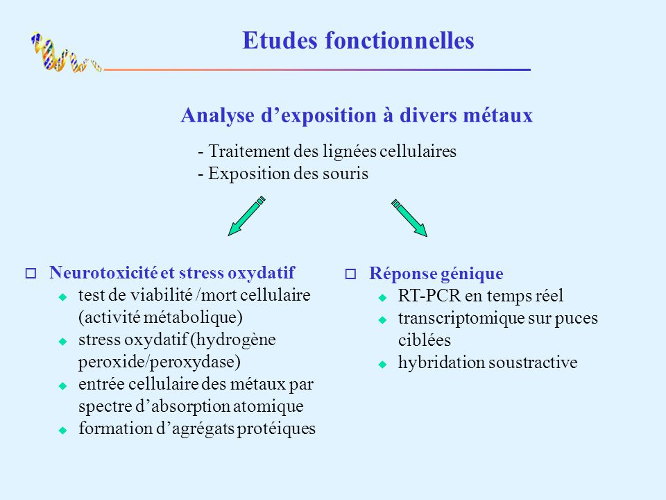 Etudes fonctionnelles Relation gènes de lhoméstasie des métaux et neurotoxicité Sélection de gènes dintérêt - suppression de lexpression par RNAi - surexpression par transfection dADNc Mesure en fonction de lexposition aux métaux - entrée des métaux - neurotoxicité
