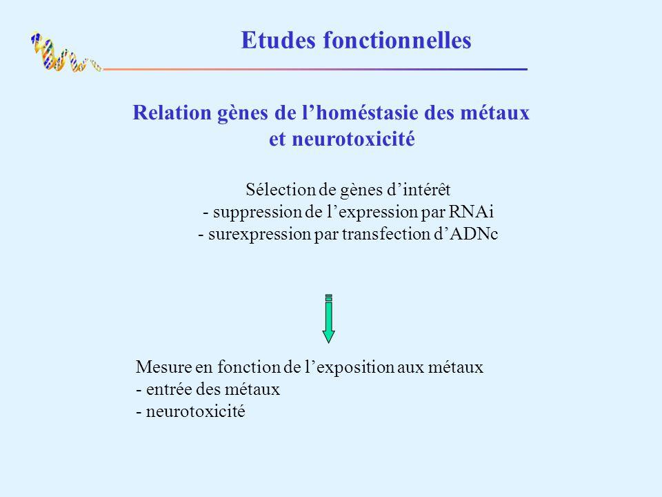 Etudes fonctionnelles Relation gènes de lhoméstasie des métaux et neurotoxicité Sélection de gènes dintérêt - suppression de lexpression par RNAi - su