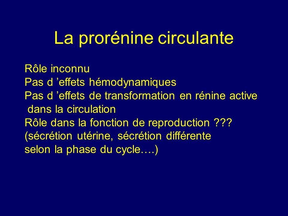 La prorénine circulante Rôle inconnu Pas d effets hémodynamiques Pas d effets de transformation en rénine active dans la circulation Rôle dans la fonction de reproduction ??.