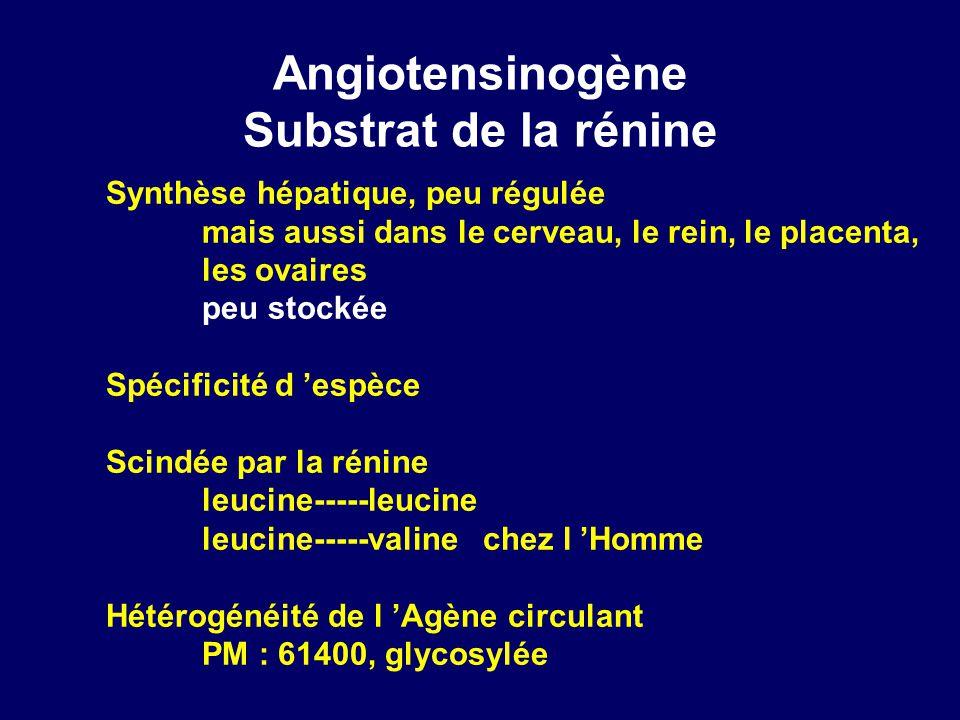 Angiotensinogène Substrat de la rénine Synthèse hépatique, peu régulée mais aussi dans le cerveau, le rein, le placenta, les ovaires peu stockée Spécificité d espèce Scindée par la rénine leucine-----leucine leucine-----valine chez l Homme Hétérogénéité de l Agène circulant PM : 61400, glycosylée