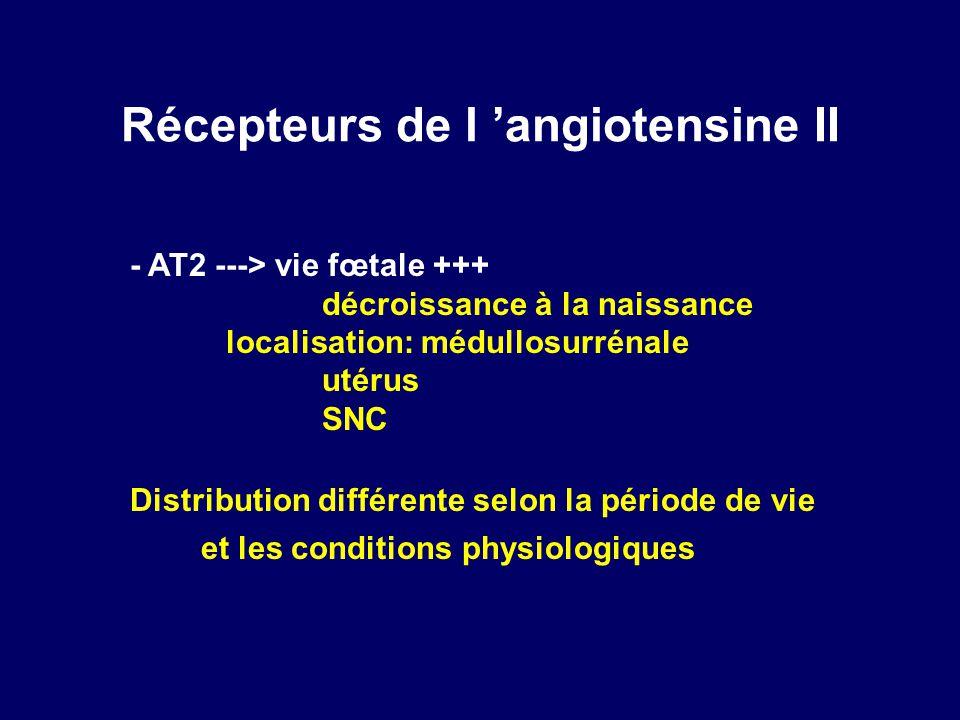 Récepteurs de l angiotensine II - AT2 ---> vie fœtale +++ décroissance à la naissance localisation: médullosurrénale utérus SNC Distribution différente selon la période de vie et les conditions physiologiques