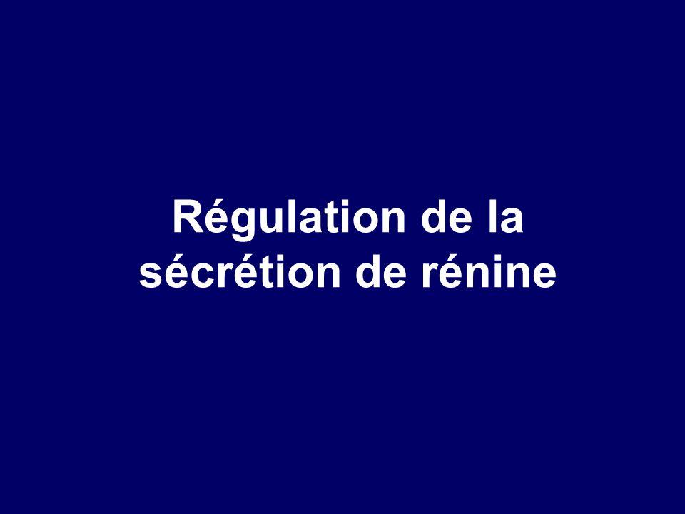 Régulation de la sécrétion de rénine
