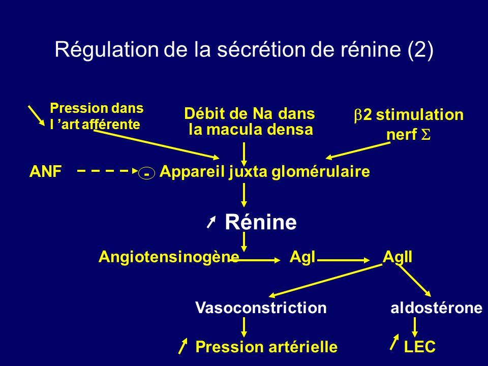 Régulation de la sécrétion de rénine (2) Débit de Na dans la macula densa Appareil juxta glomérulaire Rénine AngiotensinogèneAgI AgII Vasoconstrictionaldostérone Pression artérielle LEC ANF - Pression dans l art afférente 2 stimulation nerf