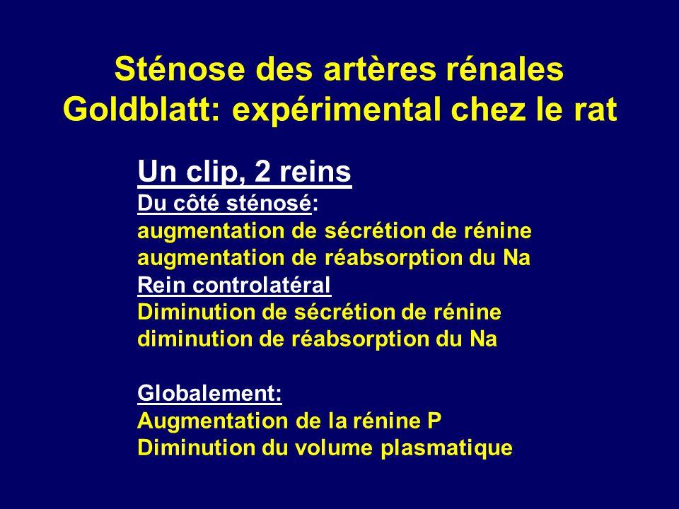 Sténose des artères rénales Goldblatt: expérimental chez le rat Un clip, 2 reins Du côté sténosé: augmentation de sécrétion de rénine augmentation de