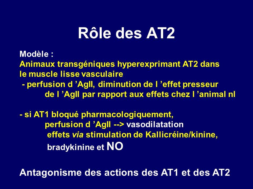 Rôle des AT2 Modèle : Animaux transgéniques hyperexprimant AT2 dans le muscle lisse vasculaire - perfusion d AgII, diminution de l effet presseur de l AgII par rapport aux effets chez l animal nl - si AT1 bloqué pharmacologiquement, perfusion d AgII --> vasodilatation effets via stimulation de Kallicréine/kinine, bradykinine et NO Antagonisme des actions des AT1 et des AT2