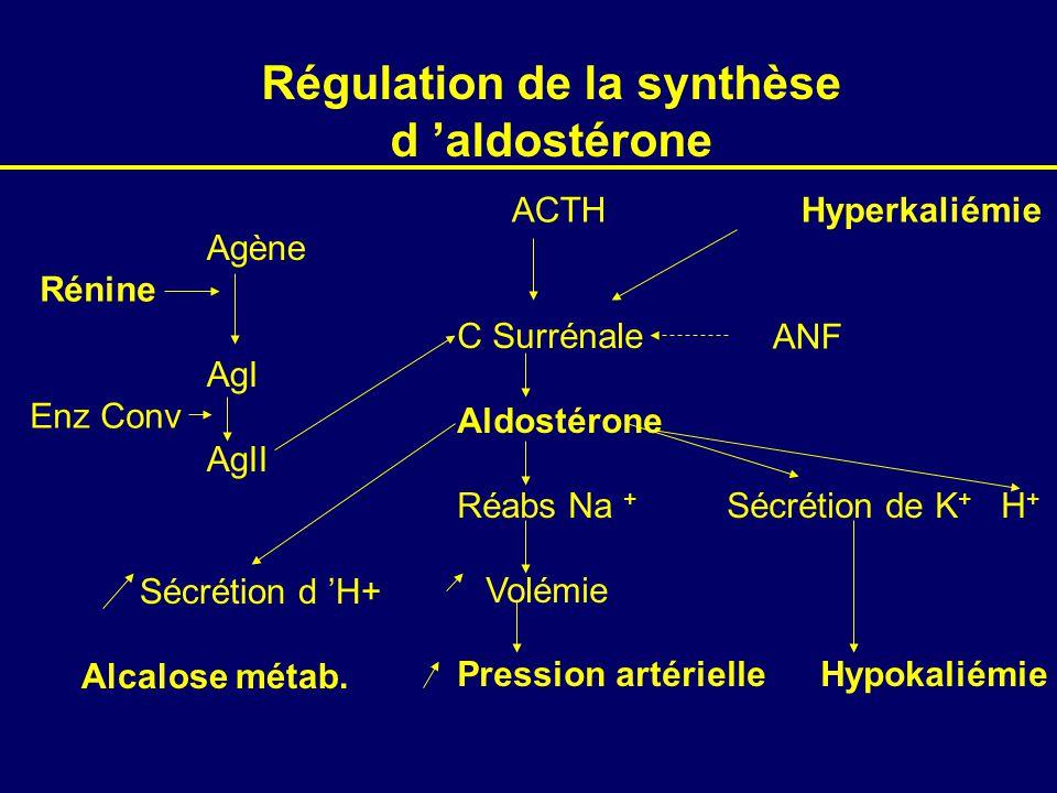 Régulation de la synthèse d aldostérone Agène AgI AgII Rénine Enz Conv C Surrénale Aldostérone Réabs Na + Sécrétion de K + H + Volémie Pression artérielle Hypokaliémie ACTH Hyperkaliémie ANF Sécrétion d H+ Alcalose métab.