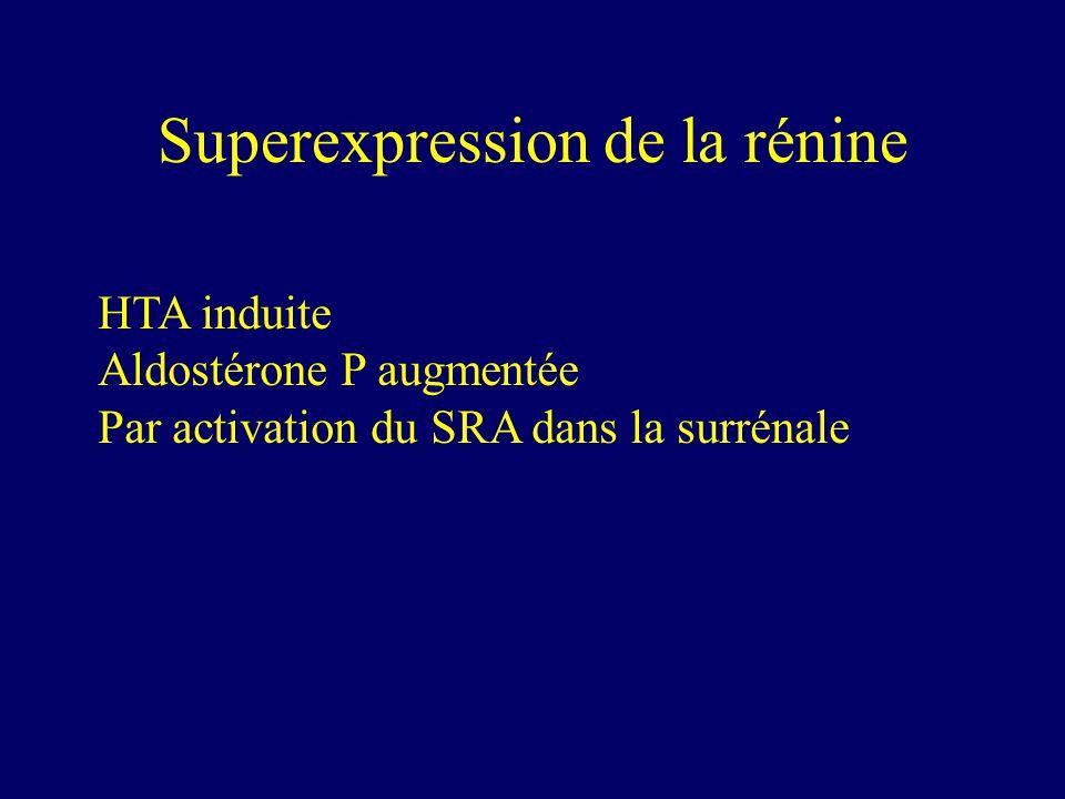 Superexpression de la rénine HTA induite Aldostérone P augmentée Par activation du SRA dans la surrénale