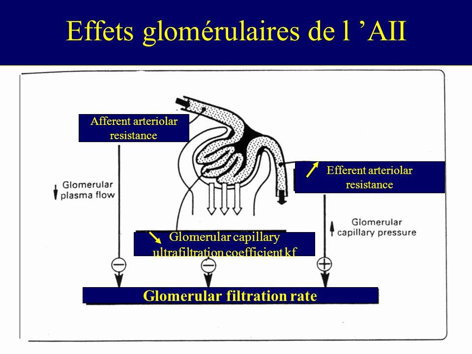 Effets glomérulaires de l AII Glomerular filtration rate Glomerular capillary ultrafiltration coefficient kf Afferent arteriolar resistance Efferent arteriolar resistance