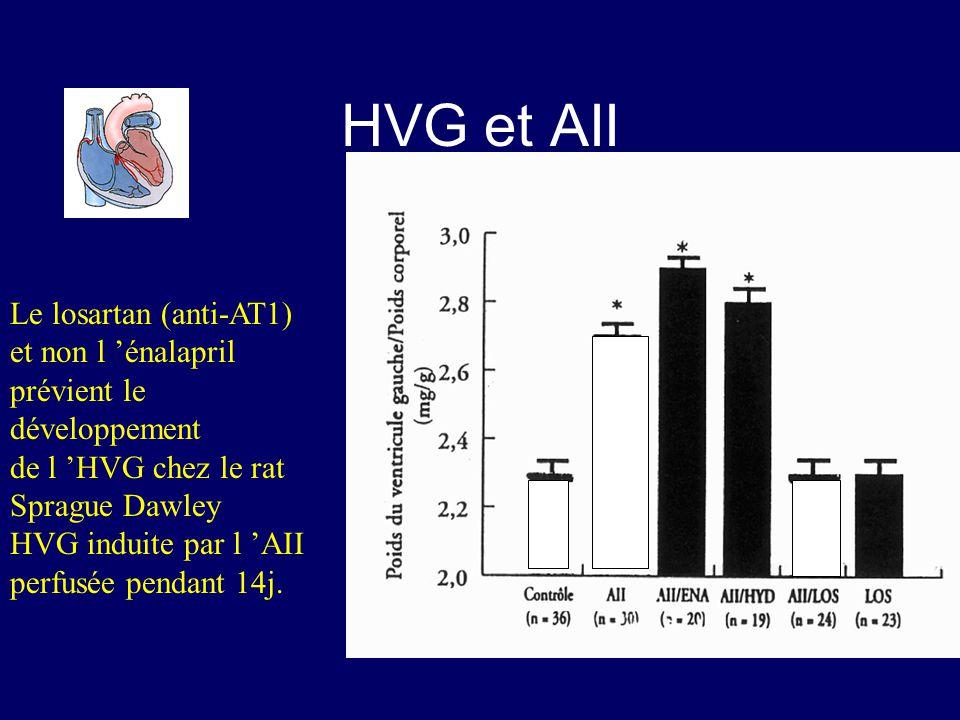 Le losartan (anti-AT1) et non l énalapril prévient le développement de l HVG chez le rat Sprague Dawley HVG induite par l AII perfusée pendant 14j. HV