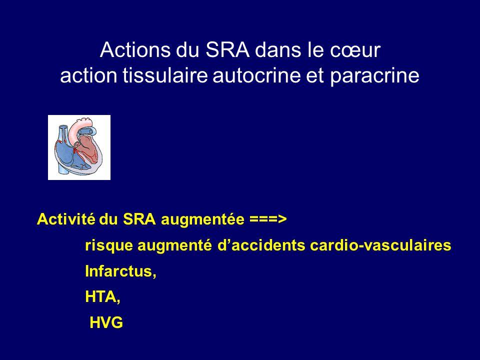 Actions du SRA dans le cœur action tissulaire autocrine et paracrine Activité du SRA augmentée ===> risque augmenté daccidents cardio-vasculaires Infarctus, HTA, HVG