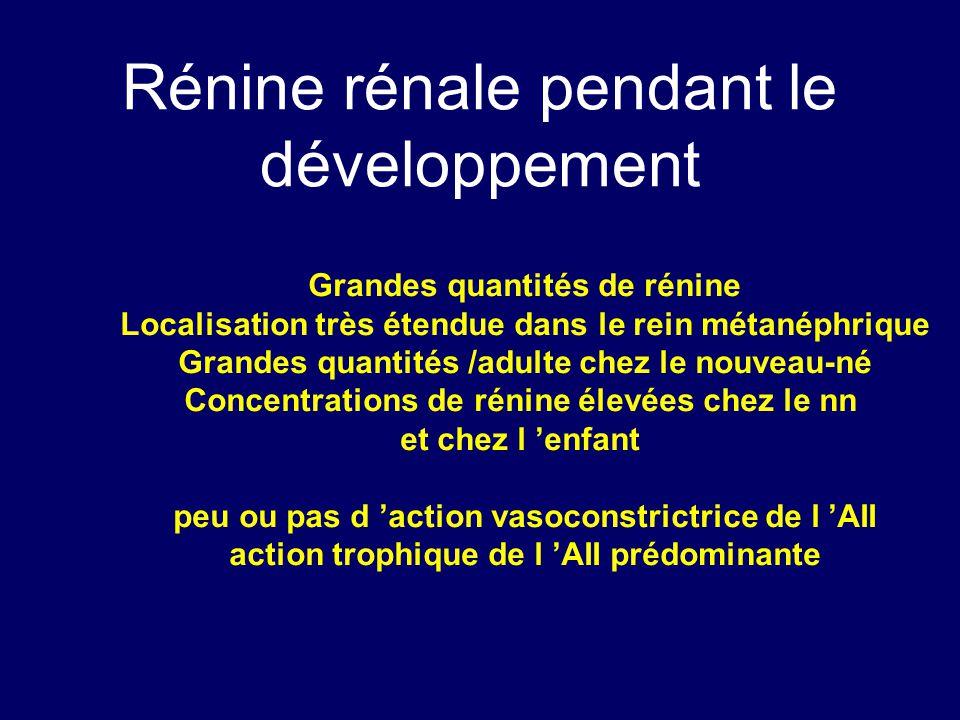 Rénine rénale pendant le développement Grandes quantités de rénine Localisation très étendue dans le rein métanéphrique Grandes quantités /adulte chez