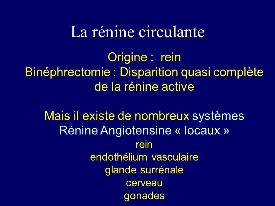 La rénine circulante Origine : rein Binéphrectomie : Disparition quasi complète de la rénine active Mais il existe de nombreux systèmes Rénine Angiote
