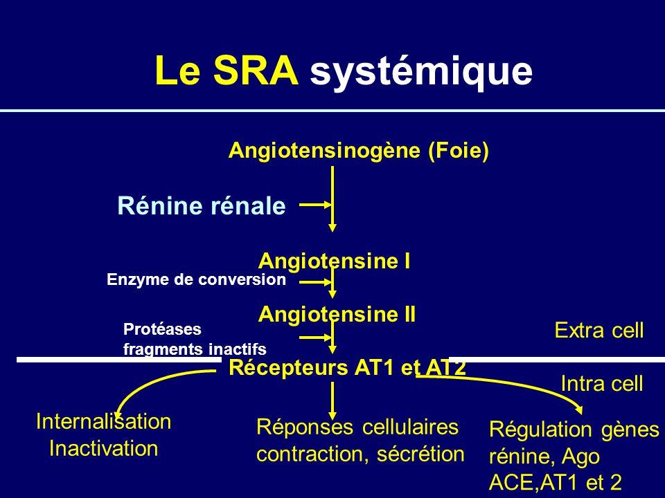 Le SRA systémique Angiotensinogène (Foie) Rénine rénale Angiotensine I Angiotensine II Récepteurs AT1 et AT2 Réponses cellulaires contraction, sécrétion Internalisation Inactivation Régulation gènes rénine, Ago ACE,AT1 et 2 Extra cell Intra cell Enzyme de conversion Protéases fragments inactifs