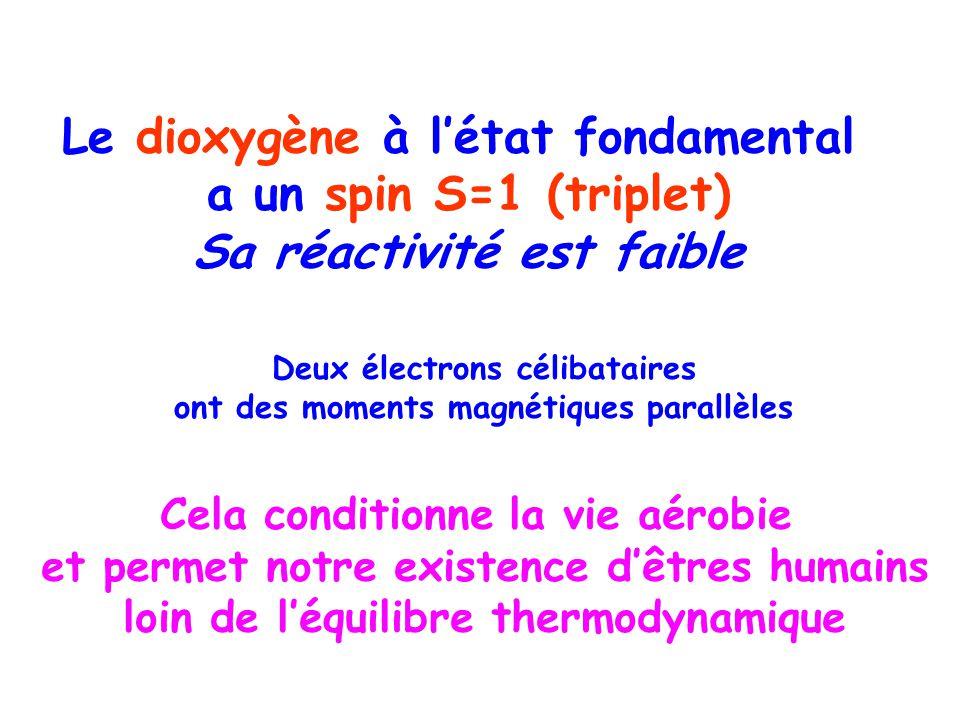 Le dioxygène à létat fondamental a un spin S=1 (triplet) Sa réactivité est faible Deux électrons célibataires ont des moments magnétiques parallèles Cela conditionne la vie aérobie et permet notre existence dêtres humains loin de léquilibre thermodynamique