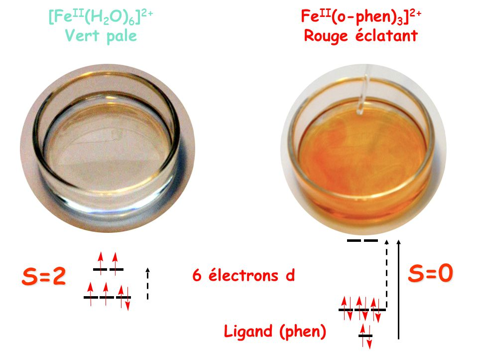 [Fe II (H 2 O) 6 ] 2+ Vert pale Fe II (o-phen) 3 ] 2+ Rouge éclatant 6 électrons d S=2 S=0 Ligand (phen)