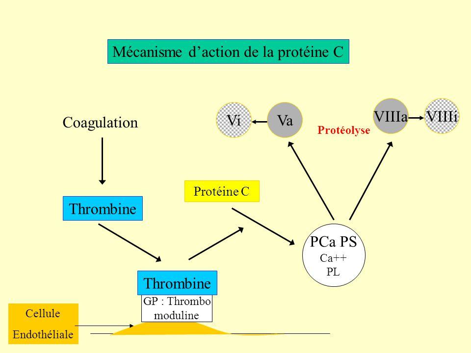Mécanisme daction de la protéine C Coagulation Thrombine Cellule Endothéliale GP : Thrombo moduline Thrombine Protéine C PCa PS Ca++ PL Protéolyse VaV