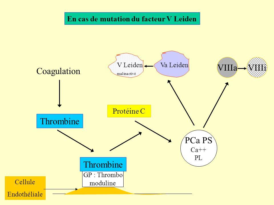 En cas de mutation du facteur V Leiden Coagulation Thrombine Cellule Endothéliale GP : Thrombo moduline Thrombine Protéine C PCa PS Ca++ PL VIIIaVIIIi