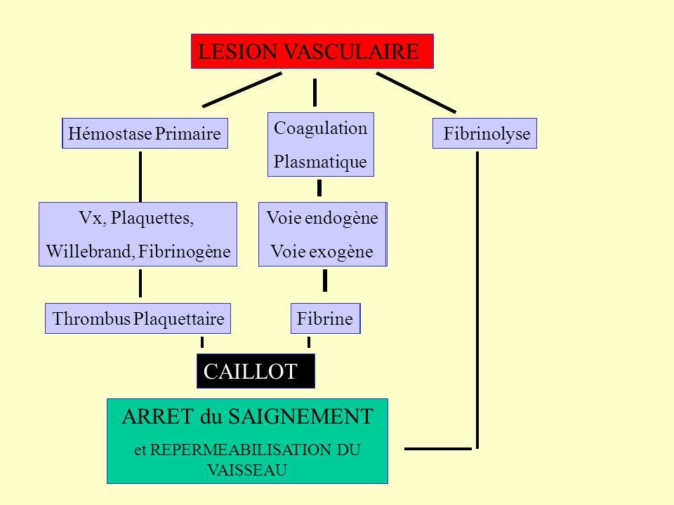 LESION VASCULAIRE ARRET du SAIGNEMENT et REPERMEABILISATION DU VAISSEAU Hémostase Primaire Coagulation Plasmatique Fibrinolyse Voie endogène Voie exog