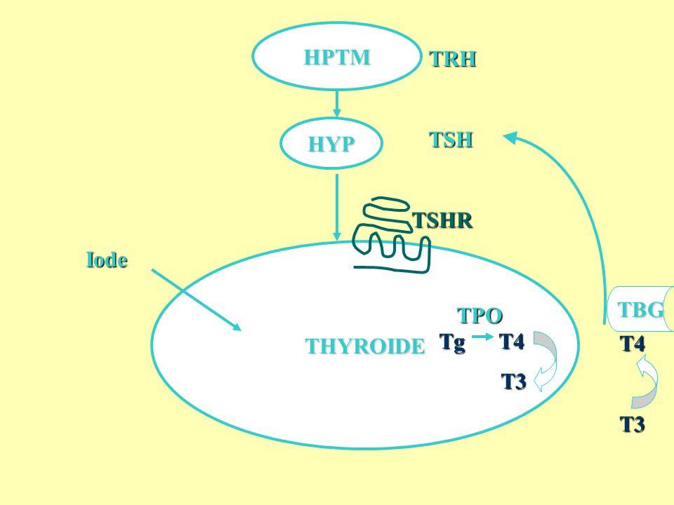 THYROIDE HPTM HYP IodeTRHTSH Tg T4 Tg T4 T3 T3TPO TBG T4T3 TSHR