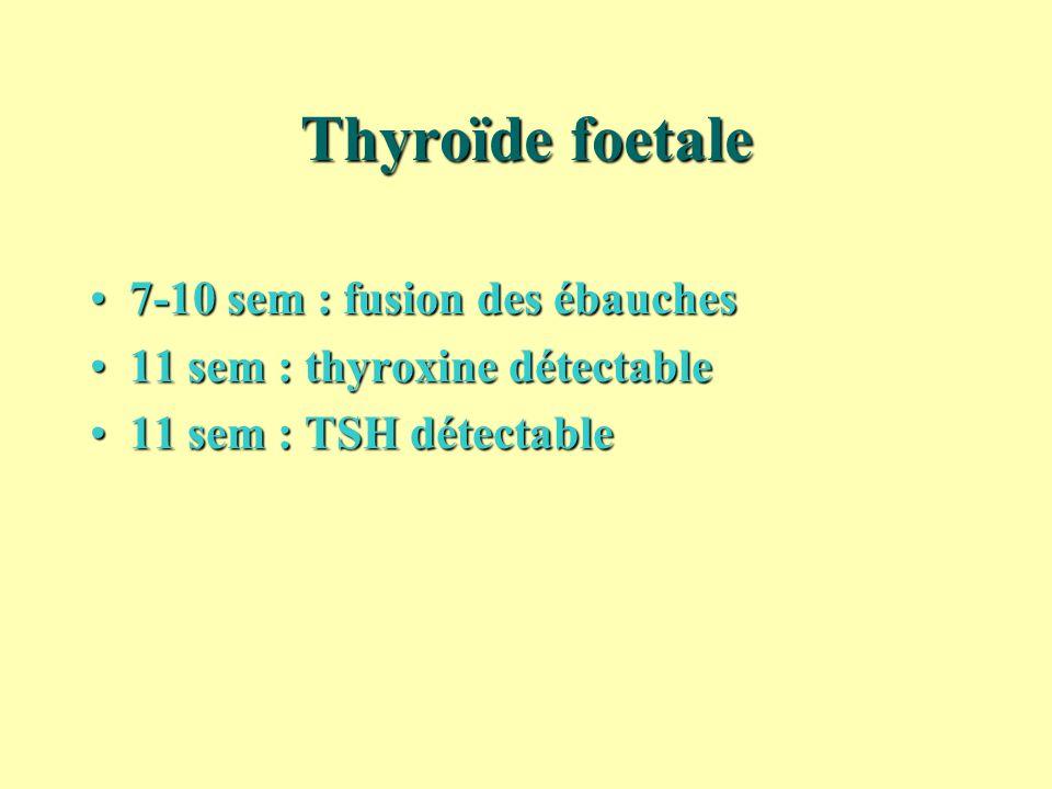 Thyroïde foetale 7-10 sem : fusion des ébauches7-10 sem : fusion des ébauches 11 sem : thyroxine détectable11 sem : thyroxine détectable 11 sem : TSH