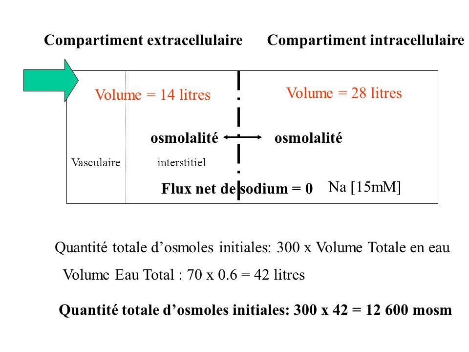 Quantité totale dosmoles finale = 12600 + 136 x 5.5 = 13 348 mosm Qté F totale dosmoles finale = Osm F x V F Totale en eau V F Totale en eau = 42 + 0.5 = 42.5 litres Doù Osm F = Qté F totale dosmoles finale /V F Totale en eau osmolalité interstitielVasculaire Na [15mM] Flux net de sodium = 0 Quantité Glucose 136 g Doù Osm F = 13 348 /42.5 = 314 mosm EAU 300 mosm 314 mosm