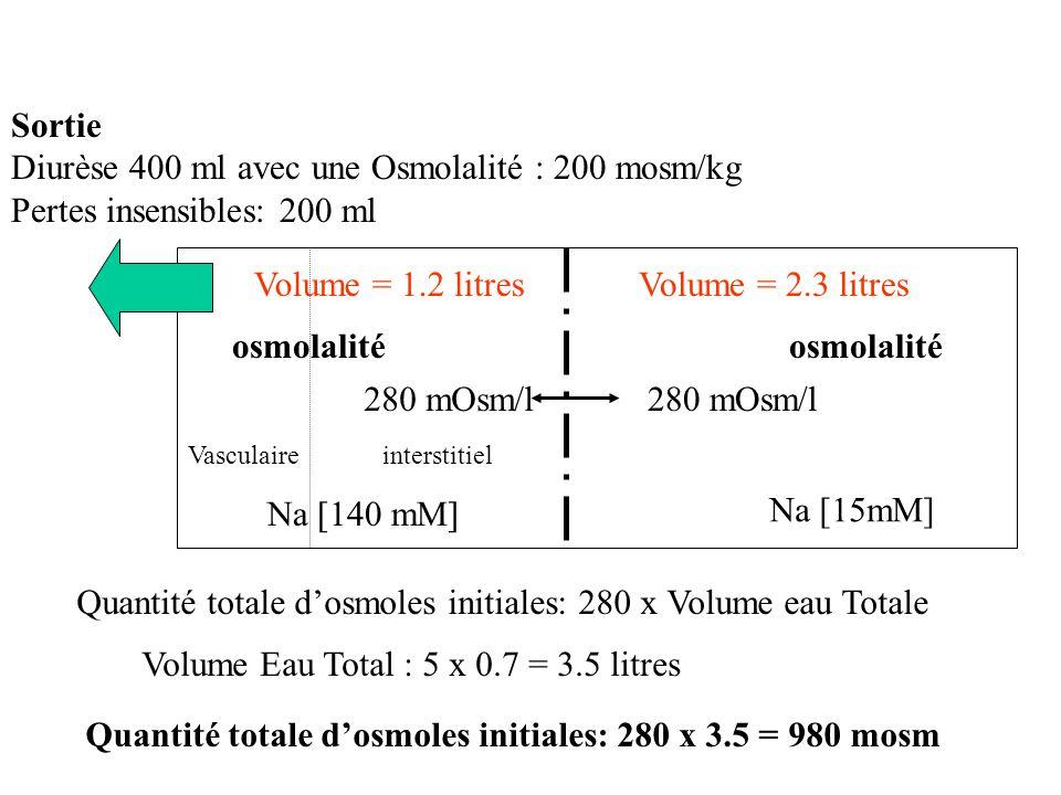 osmolalité interstitielVasculaire Na [15mM] Na [140 mM] 280 mOsm/l Flux net de sodium = 0 Sortie Diurèse 400 ml avec une Osmolalité : 200 mosm/kg Pertes insensibles: 200 ml Quantité totale dosmoles finales = 980 - (200 x 0.4) = 900 mosm Volume Eau Total Final : 3.5 – 0.6 = 2.9 litres Doù Osm F = Qté F totale dosmoles finale /V F Totale en eau = 900 /2.9 = 310 mos/l