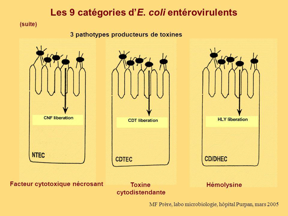 Les 9 catégories dE. coli entérovirulents (suite) 3 pathotypes producteurs de toxines Facteur cytotoxique nécrosant Toxine cytodistendante Hémolysine
