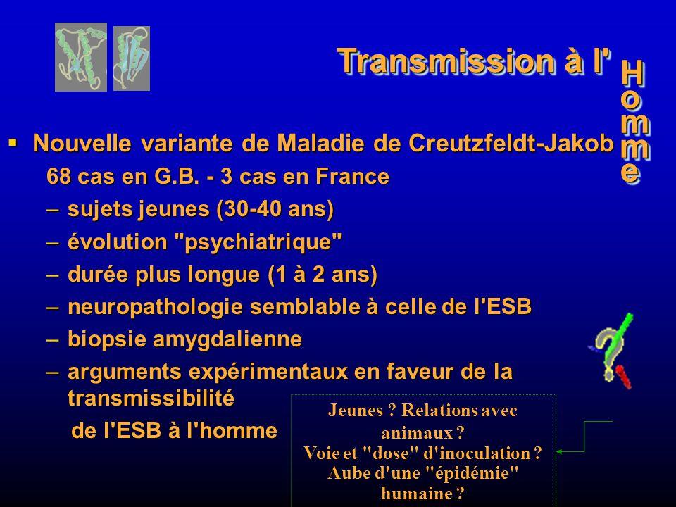 Nouvelle variante de Maladie de Creutzfeldt-Jakob Nouvelle variante de Maladie de Creutzfeldt-Jakob 68 cas en G.B. - 3 cas en France –sujets jeunes (3